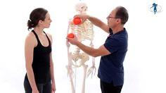 Befreiter Brustkorb, Bewegliche Wirbelsäule - Die Franklin-Methode®