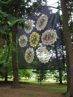 pollen transparent