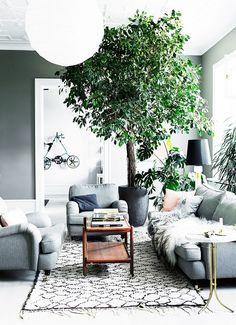 Greenery is a chic complement to shades of cool grey. This giant tree holds its own among the luxe textures of this living room, making a bold, bushy statement.