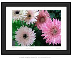 Pink Flowers Arrangement of Gerber Daisies by Renee Dent Blankenship and available online at theRDBcollection | Has a complimentary hot pink pair of flowers that look beautiful hung together