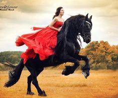 Imagen de beautiful, black horse, and dress Pretty Horses, Horse Love, Dark Horse, Beautiful Horses, Horse Girl Photography, Equine Photography, Portrait Photography, Woman Riding Horse, Friesian Horse