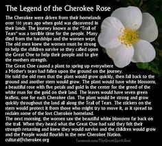 The Legend of the Cherokee Rose. Being part Cherokee and living a few minutes from near the trail of tears start (living in Dawsonville, Ga, USA) this hits close to home Native American Prayers, Native American Spirituality, Native American Cherokee, Native American Tattoos, Native American Wisdom, Native American Tribes, Native American History, American Symbols, Cherokee Indian Art