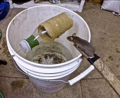 Used my gopro to try and capture this creative mouse trap go to work best mouse trap easiest simplest mouse trap diy Mouse Trap Diy, Best Mouse Trap, Rat Trap Diy, Mice Control, Pest Control, Les Rats, Rat Traps, Mini Farm, Chickens Backyard