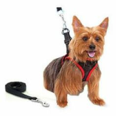 Leash for Pets - As seen on TV is a new humane harness that's lightweight and easily adjustable. It's special design allows for maximum comfort and safety every time you walk your dog. Leash is designed to move the pressure away from your dog's neck and on to the shoulders and back. It will not constrict your dog's breathing so it's perfect for dogs with short snouts or breathing problems. Sends control signals to your dog's chest and body www.difmall.com