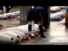 Tsukiji 101: Planning Your Visit to Tokyo's Tsukiji Fish Market