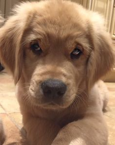 U could get lost in those puppy dog eyes.
