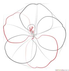 How to draw a hibiscus flower step by step drawing tutorials how to draw a hibiscus flower step by step drawing tutorials for kids and beginners ccuart Image collections