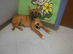 German Shepherd Dog dog for Adoption in Augusta, GA. ADN-683740 on PuppyFinder.com Gender: Male. Age: Young