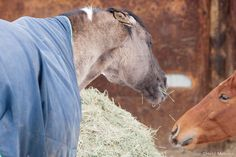 Trainer Julie Goodnight discusses the causes and remedies for a horse's bad behavior at feeding time.