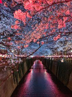 Cherry Blossom Tree, Blossom Trees, Yoshino Cherry Tree, Shinjuku Gyoen, Learn Japanese Words, Beautiful Nature Wallpaper, Travel Light, Spring Day, Aesthetic Backgrounds