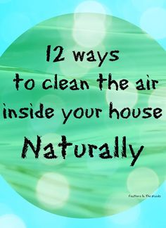 Feathers in the woods: 12 ways to clean the air inside your house Natural...