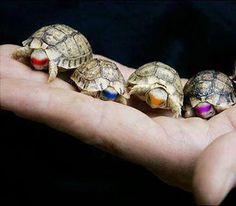 real, baby TMNT