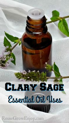 Wondering what Clary Sage Essential Oil is used for? Here are some ways to use…