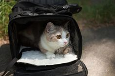 Traveling with a cat isn't impossible, it just takes a little preparation and planning. Here are some tips for a smooth trip.