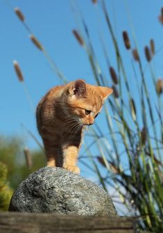 """""""Way down deep we are all motivated by the same urges. Cats have the courage to live by them."""" --Jim Davis (Creator of """"Garfield"""")"""