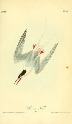 """https://flic.kr/p/e6xcd1 