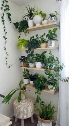 Indoor Garden, Indoor Plants, Outdoor Gardens, Mini Gardens, Herb Garden, House Plants Decor, Plant Decor, Plant Wall Diy, Indoor Plant Shelves