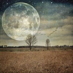 full moon photo, surreal landscape photo, tree photo, home decor,... ($18) ❤ liked on Polyvore featuring home and home decor