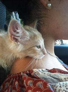 Lovely-KittyCats, catsamazing: He sat like this the entire way...