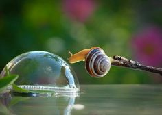 Looks like the snail wants to burst the water bubble