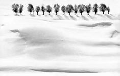 Snow by Abbas Kiarostami