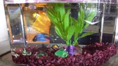 fish are most welcome guests to the classroom!