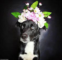 """""""O GRITO DO BICHO"""": Fotógrafa ajuda na adoção de cães pretos e velhos #ogritodobicho#falabicho"""