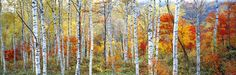 'Fall Trees, Shinhodaka, Gifu, Japan' by Panoramic Images on artflakes.com as poster or art print $16.63
