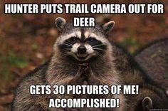 Raccoon Ultimate photobombers