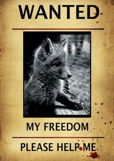 Stop Animal Abuse * * PLUS DON'T WEAR REAL FUR !