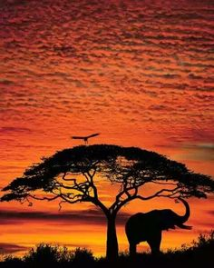Reminds me of my favorite Disney movie, The Lion King.  Cannot wait to see this in person!
