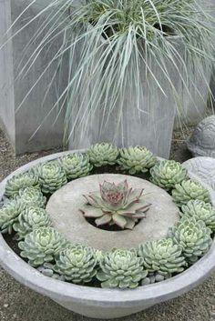 Concrete planter with succulents