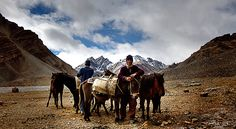 Our Stok Kangri expedition includes flights from Ireland, and you travel with an experienced Irish guide and doctor. Start your adventure today. Climbing, Traveling By Yourself, Earth, Horses, Explore, Adventure, Mountains, Animals, Animales