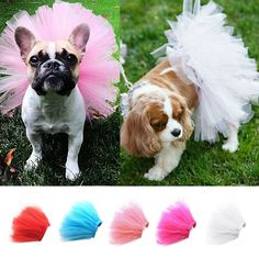 AnnaEye Pet Costume Dog Clothes Apparel Handcrafted Tulle Skirt Puppy Doggy Tutu Dress https://www.amazon.com/AnnaEye-Costume-Clothes-Apparel-Handcrafted/dp/B01MCT4ACB/ref=sr_1_22?ie=UTF8&qid=1477445722&sr=8-22&keywords=AnnaEye&th=1  - I needed a smile today. Thanks. SRF