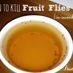 How to Kill Fruit Flies {With things you already have in your home} - I am THAT Lady