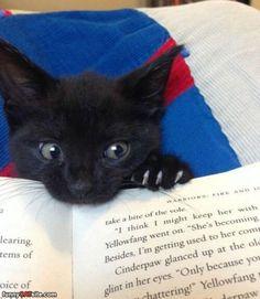 This_Book_Tastes_Nice