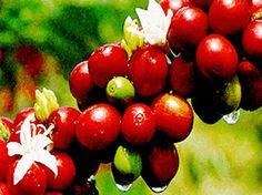 Spice Garden - Kerala, India