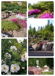 @ omapiha kivipolut, nuotiopaikka, juhannusruusu, kivikkokasvit