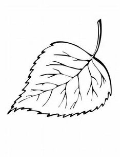 maple leaf coloring page drawing kids