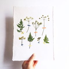 Pressed Flower Artworks from MR Studio London: Gardenista
