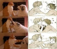 Anime version of dog and cat pics<<< cough cough spamano cough cough cough Funny Anime Pics, Cartoon As Anime, Anime Meme, Manga Anime, Anime Art, Cartoon Fun, Anime Version, Anime Kunst, Cute Comics