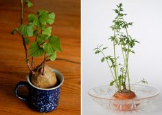 Charming Kitchen Plants From The Garden