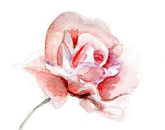 Original Rose Watercolor Painting. Pink Rose Aquarelle. Flower painting. Zen drawing on paper.