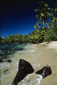 * Anaho Bay with coconut palms and Pandanus plants - French Polynesia