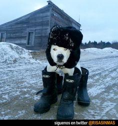 Así van los perros en Rusia.