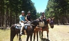 Westwood Park Riding: Beach  (Silversands/Aldinga)  Forest Trail Rides (Kuipo Forest). Sunrise   sunset beach rides available.