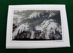 Pine Tree after a Winter's Snowfall Photography by LucybellesCards, $4.00