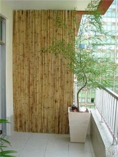 Design raiz: Bambu inspirador