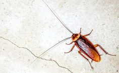 5 Eye Opening Facts About Cockroaches