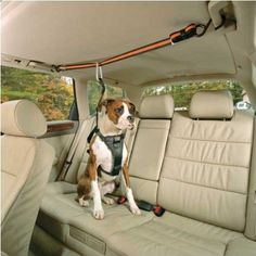 I've never seen this before...good idea, though!  Amazon.com: Kurgo Automobile Zip-Line, Medium (Dogs 25 to 50 Pounds): Pet Supplies